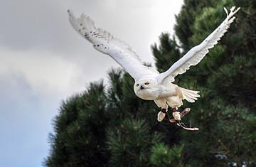飛ぶ・跳ぶ・翔ぶ